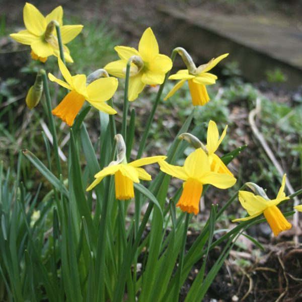 Narcissus-Jetfire