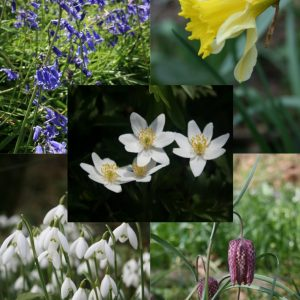 Special-Collection-of-Native Bulbs